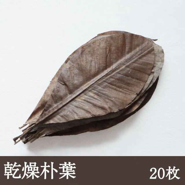 乾燥朴葉 20枚