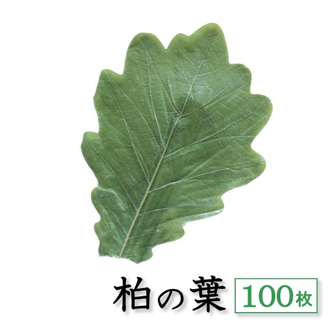 柏の葉 100枚 アイコン