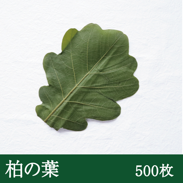 柏葉(緑色)500枚
