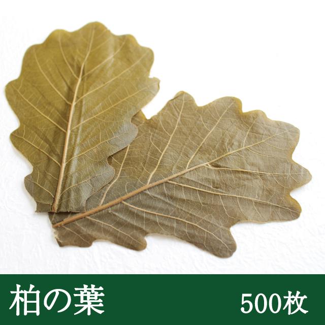 柏葉(茶色)500枚
