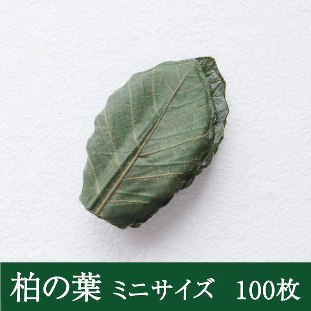 ミニ柏の葉100枚