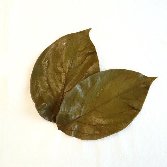 国産柿の葉