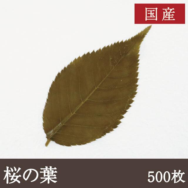 国産桜の葉500枚