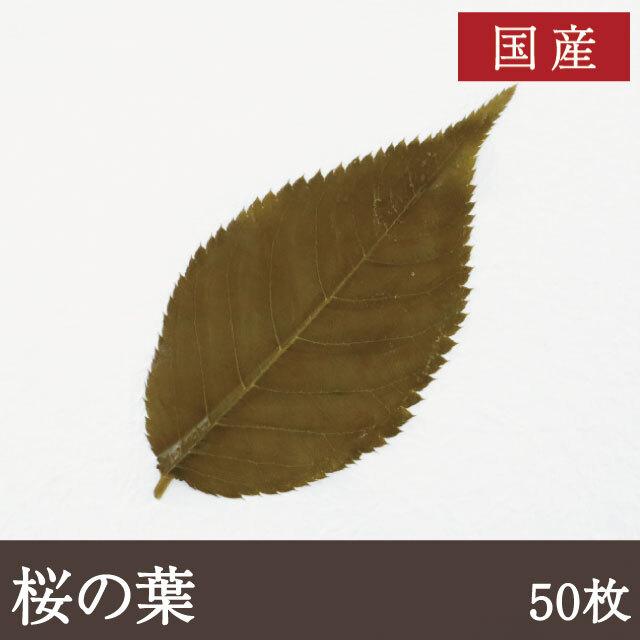国産桜の葉50枚