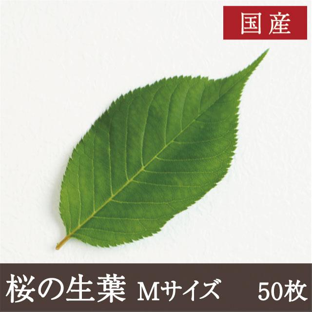 桜の生葉 M 50枚