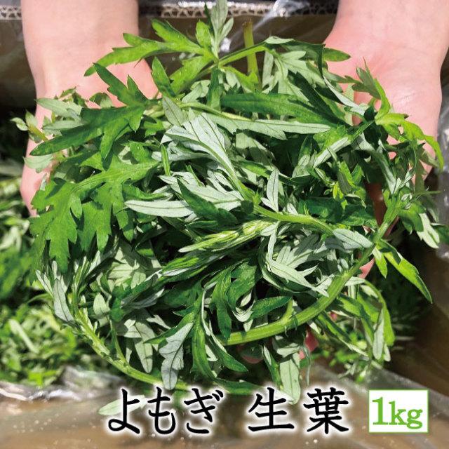 よもぎ生葉 アイコン 1kg