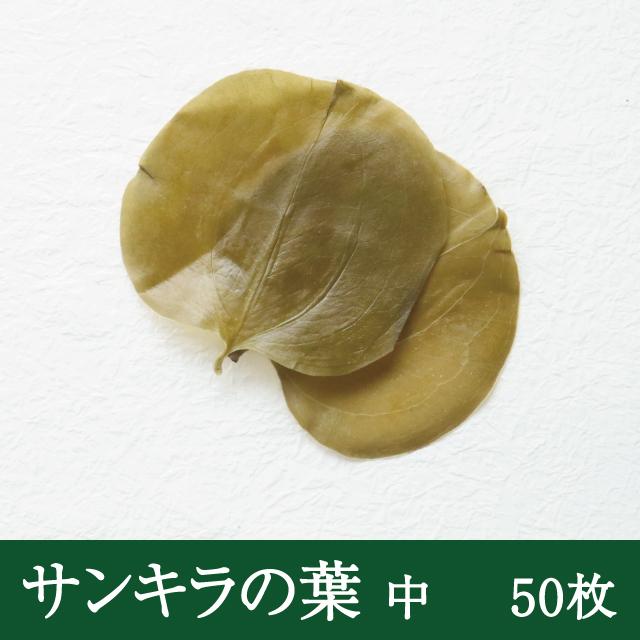 サンキラの葉中50枚
