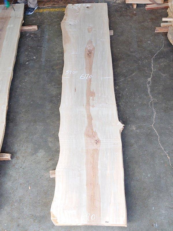 TT-209 栃トチノキ 国産 天然耳付き板 3700×700 天然乾燥材