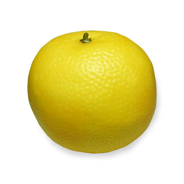 樹脂製 グレープフルーツ
