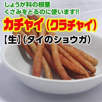 カチャイ(タイショウガ) 【生】