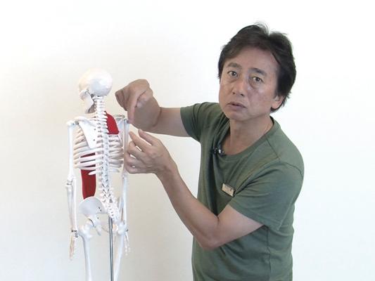 セミナー 【11月30日開催】 「トリガーポイント療法」1day実技集中セミナー