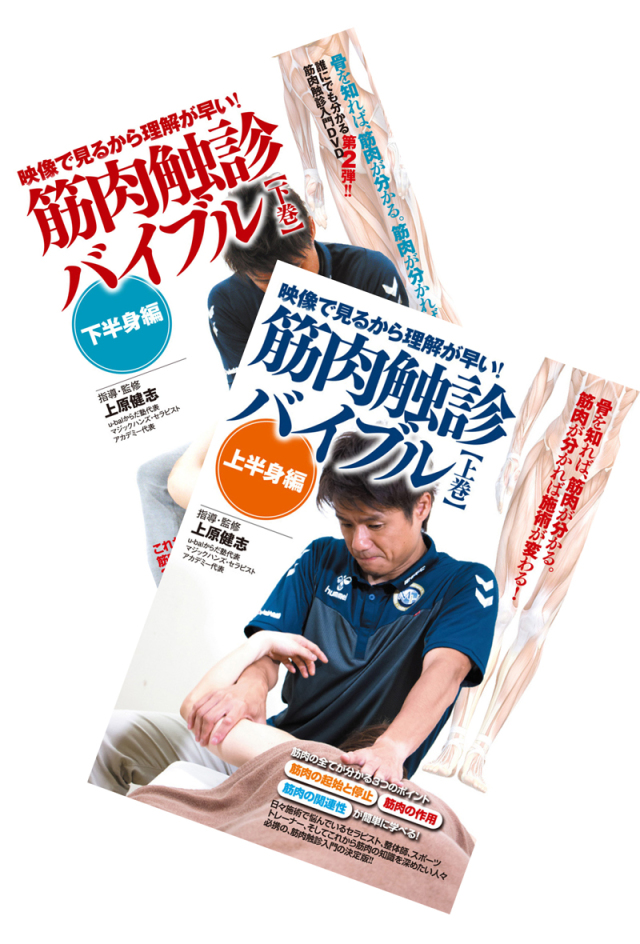 DVD 筋肉触診バイブル 通販限定2巻セット