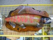 魚の剥製 サクラマス 右頭 52cm