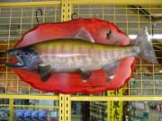 魚の剥製 ヤマメ 49cm 板付き
