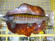 魚の剥製 ヤマメ 38.5cm 板付き