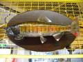 魚の剥製 ヤマメ 35cm 板付き