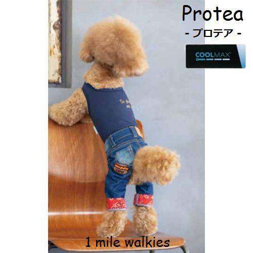 ワンマイルウォーキーズ 1 mile walkies プロテア Protea