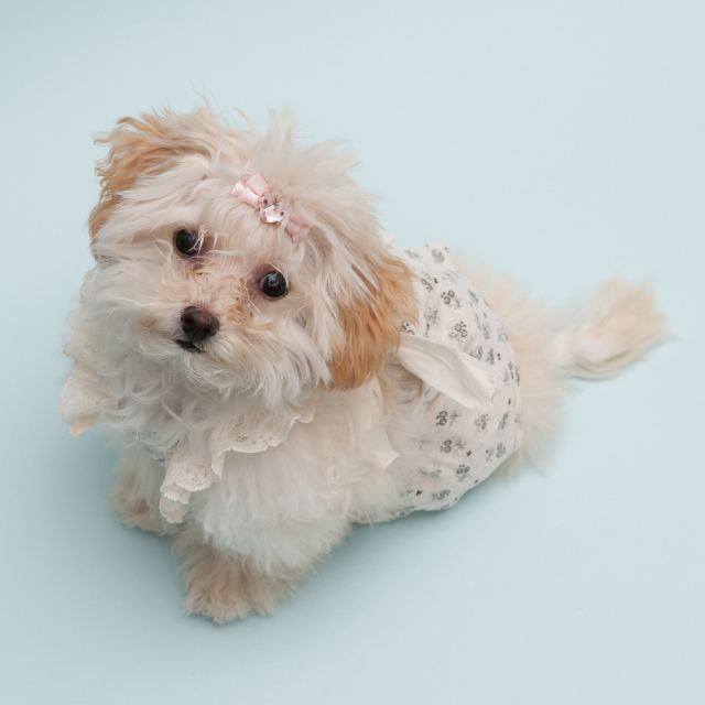 louisdog(ルイスドッグ) Strappy Strappy Pants