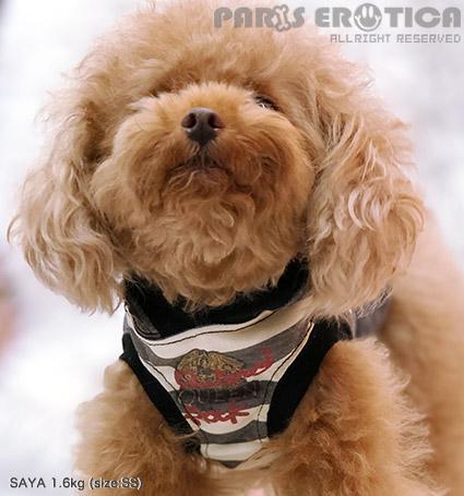 PARIERO(パリエロ)PEQueenCoolmotionHoodie[先行予約]【小型犬犬服ウエアトップスタンクセレブ】