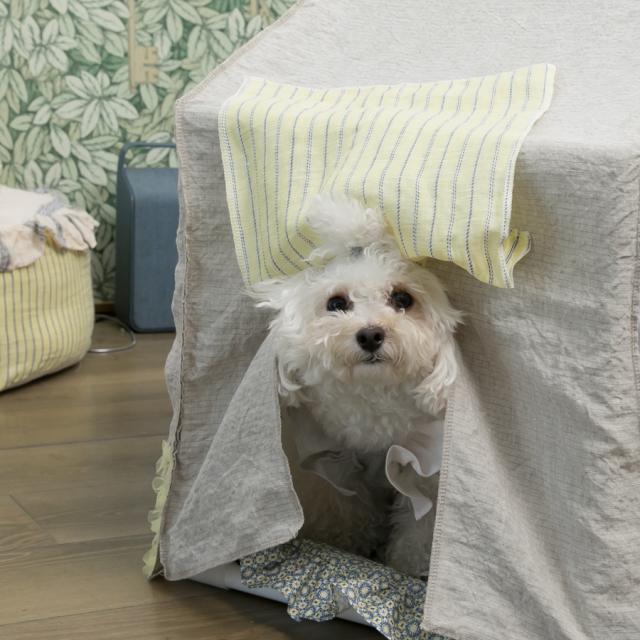 ルイスドッグ louisdog BOHO Peekaboo/Natural