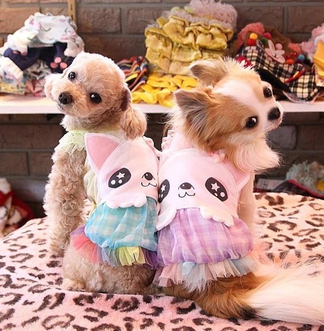 J&Kアニマルズ J&K animals ☆たまちゃん ワンピース