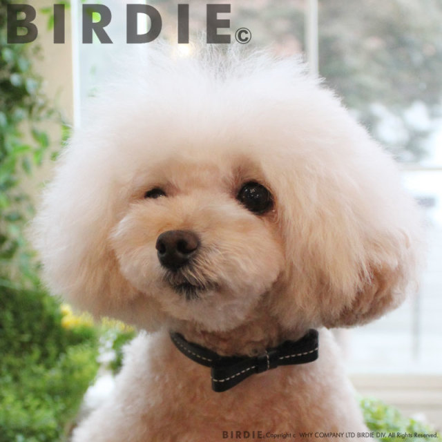 バーディ BIRDIE リボンステッチカラー