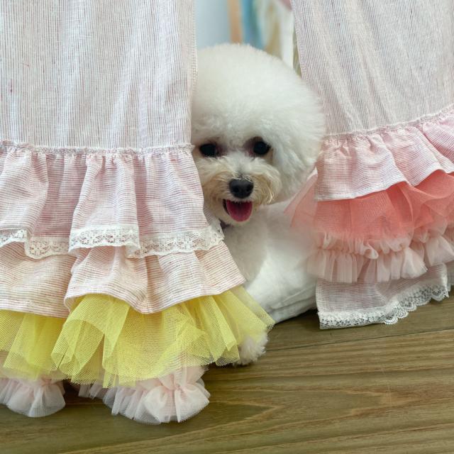 ルイスドッグ louisdog Peekaboo Couture/Tropea