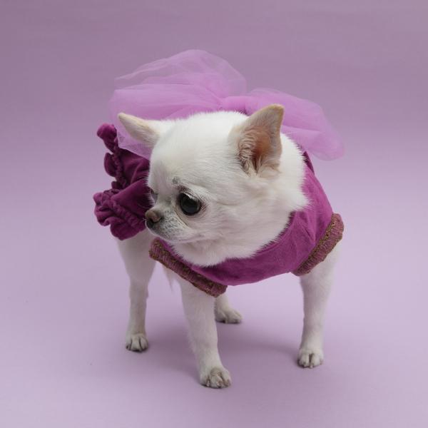 ルイスドッグ louisdog Velvety Big Bow Dress