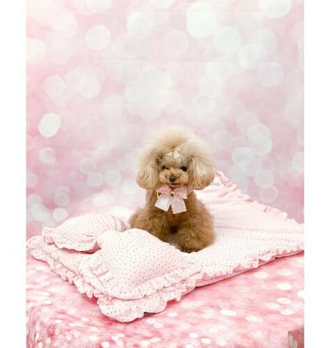 フォーペッツオンリー for pets only PASSPARTOUT PINK MAT (PE2021-M2)