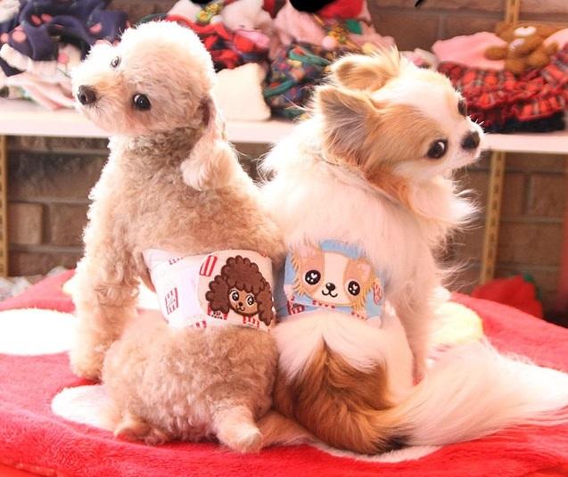 J&Kアニマルズ J&K animals ☆ポップコーン マナーベルト☆