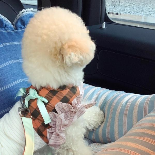 ルイスドッグ louisdog Smoothie Harness Set