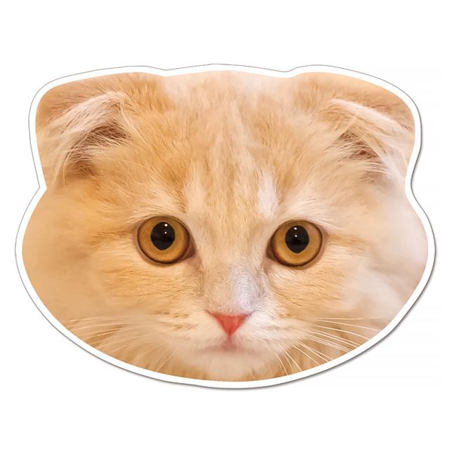 77スコティッシュ猫マグネット1