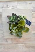 壁掛けアート 多肉植物寄せ植え
