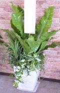 夏限定 観葉植物の季節の寄せ植えギャザリング(要予約商品)