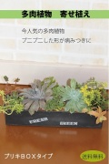 多肉植物寄せ植えギャザリング 黒ブリキBOX(要予約商品)