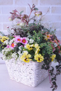 白カゴ四角型 季節の寄せ植えギャザリング(要予約商品)