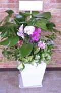 夏限定 モンステラなどの観葉植物の季節の寄せ植えギャザリング(要予約商品)