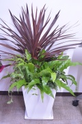 夏限定 コルディリネなどの観葉植物の季節の寄せ植えギャザリング(要予約商品)
