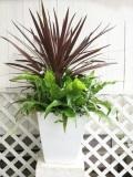 コルディリネなどの観葉植物の季節の寄せ植えギャザリング(要予約商品)