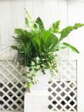 観葉植物の季節の寄せ植えギャザリング(要予約商品)