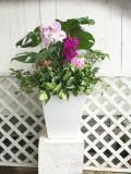 胡蝶蘭モンステラなどの観葉植物の季節の寄せ植えギャザリング(要予約商品)