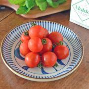 和食器・砥部焼 縁紅とくさ唐草の切立丸皿(6寸)