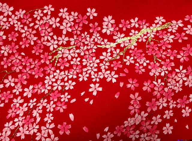 毛氈(もうせん) 花桜