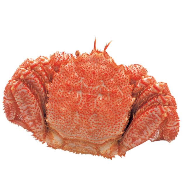 浜ゆで毛がに 1パイ(約500g)【0002】