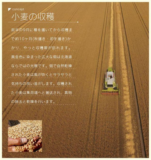 パン工房ひかりコンセプト04 小麦の収穫
