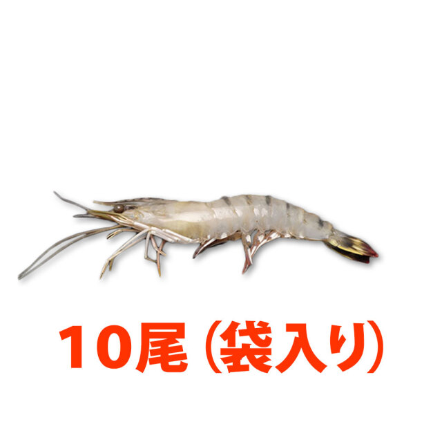 マダカスルージュ10尾小分け