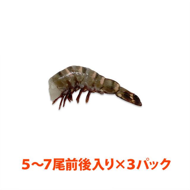 無頭シータイガー13/15 3パック