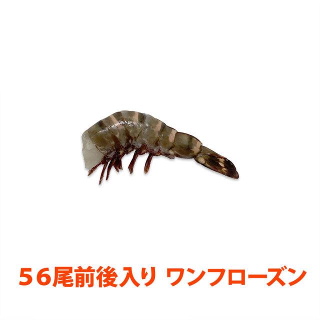 無頭シータイガー13/15 ブロック
