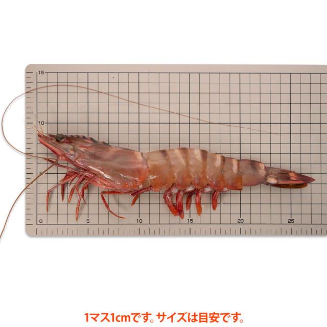 有頭12尾サイズ