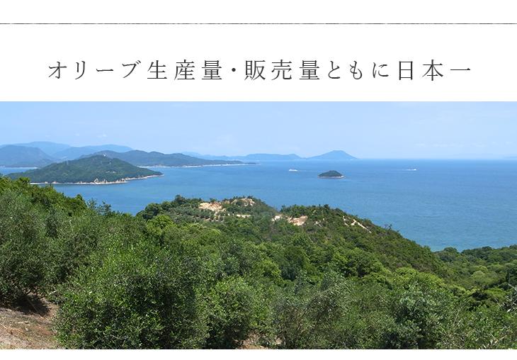 オリーブ生産量・販売量ともに日本一